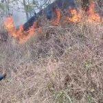 Hutan Merapi Terbakar Relawan MDMC Ikut Padamkan Api